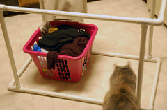 Laundry Hamper - cat inspection time