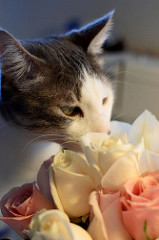 teek takes time to smell the roses